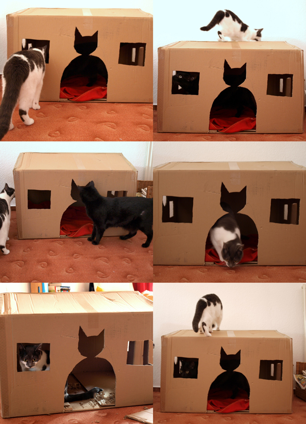 diy homemade cardboard box cat house darlene michaud 2
